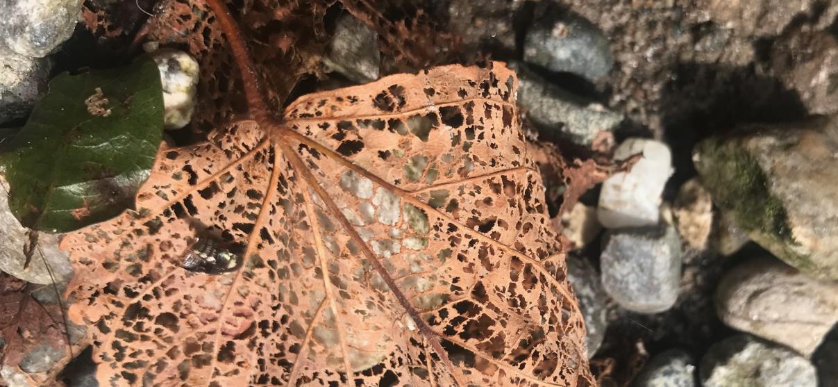 Es knospt unter den Blättern…